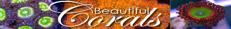 http://fragniappe.com/images_fragniappe/exhibitors/beautifulcorals.png